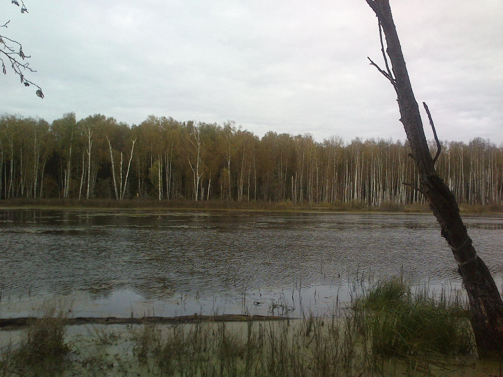Озеро в алабино рыбалка