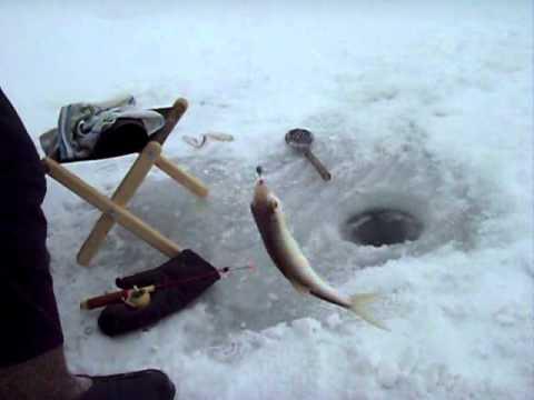 Ловля ельца зимой, видео.
